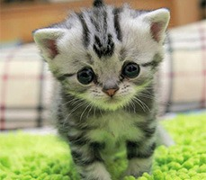 Anime Severlerin Duygularına Tercüman Olan Üzgün Kedi